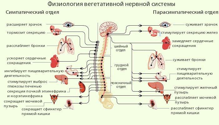 Гипотонический тип в основном