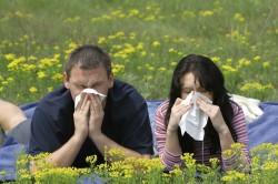 Аллергия как причина ревматизма сердца