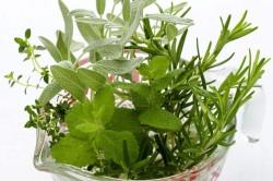 Лекарственные травы для лечения сердечной недостаточности