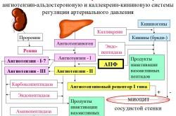 Ингибиторы ангиотензина