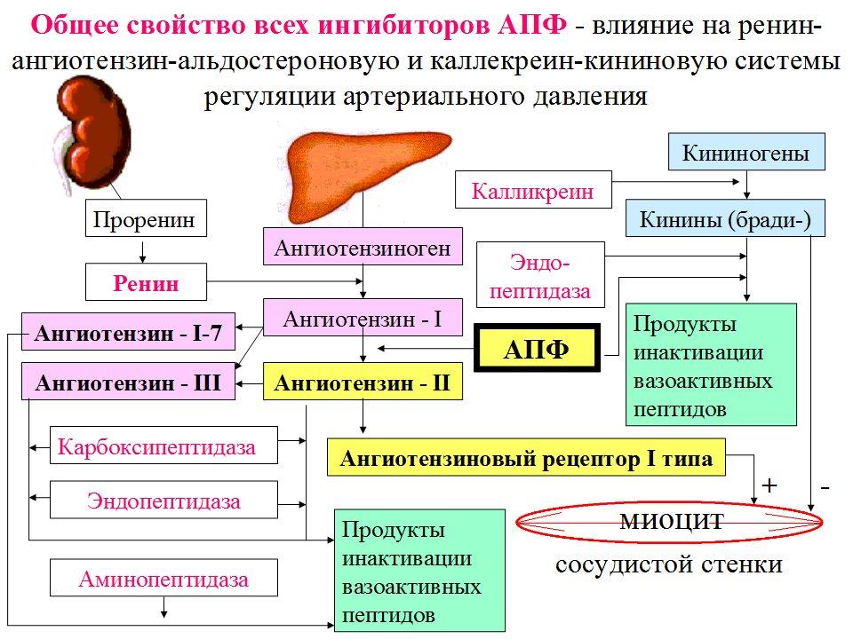 блокаторы рецепторов ангиотензина 2 и потенция
