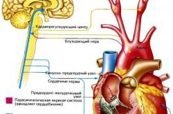 Контролирование сердцебиения