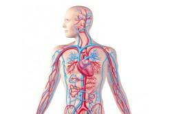 Улучшение состояния кровеносной системы при приеме антагонистов рецепторов ангиотензина 2