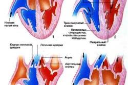 Схема работы сердца по прокачиванию крови